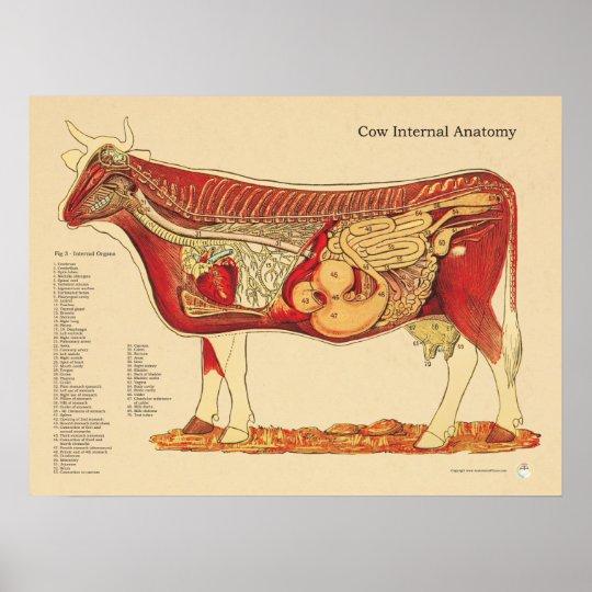 Póster Carta interna veterinaria bovina de la anatomía de | Zazzle.es