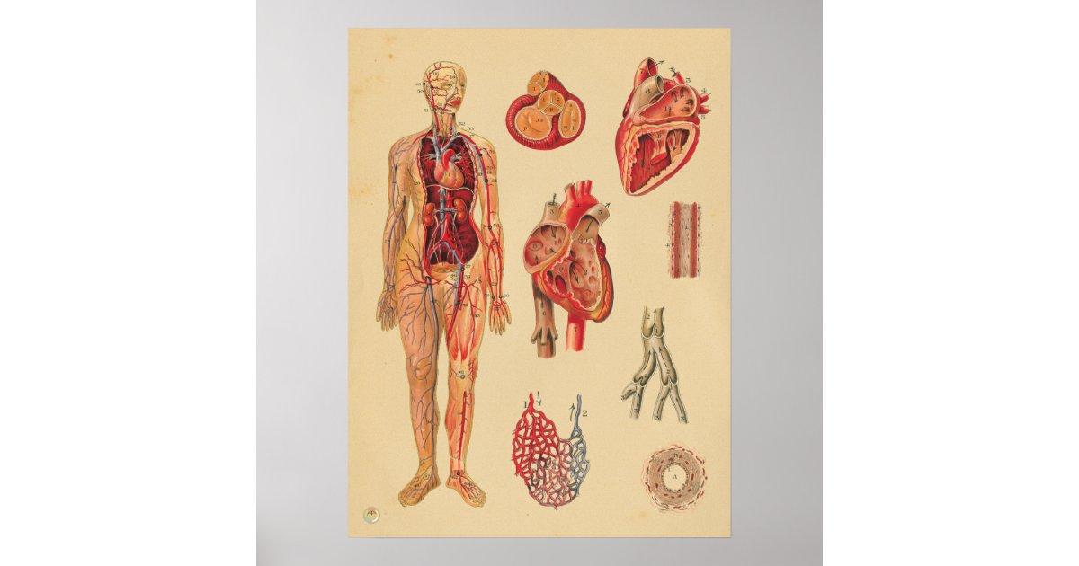 Magnífico Anatomía Humana Cartas Motivo - Imágenes de Anatomía ...