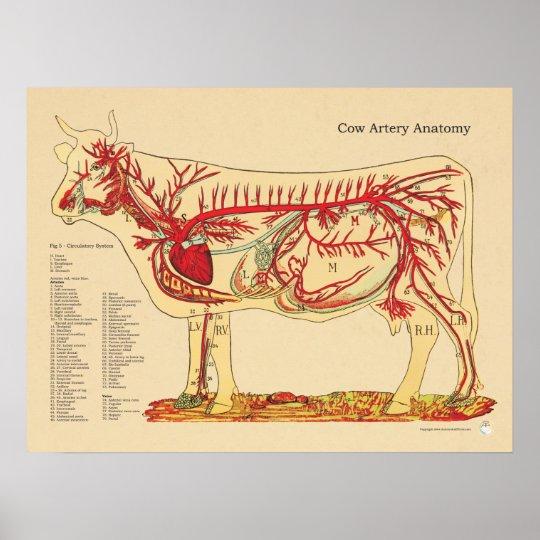 Póster Carta veterinaria bovina de la anatomía de la | Zazzle.es