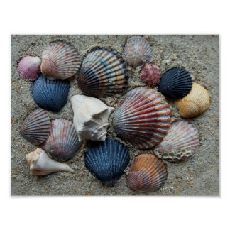 Póster Cáscaras coloridas del mar
