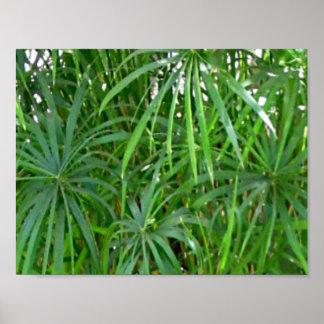 Poster casero asiático de bambú verde de la