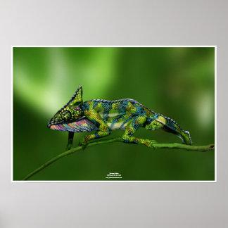 Póster Chameleon by Johannes Stötter