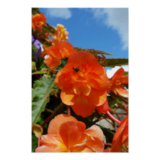 Póster cielo, flores y abeja
