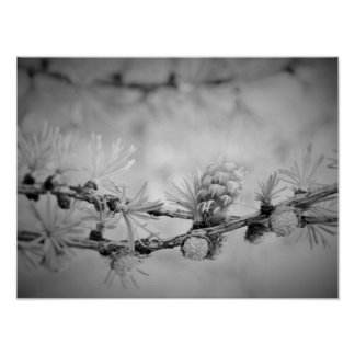 Póster CK y flor blanco del alerce