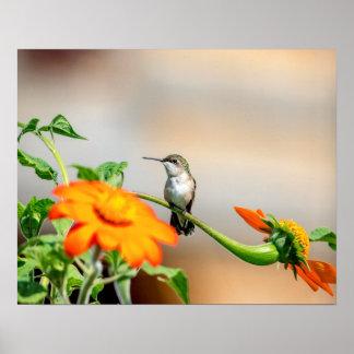 Póster colibrí 20x16 en una planta floreciente