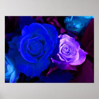 Poster color de rosa púrpura azul