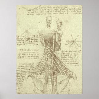 Póster Columna espinal de la anatomía humana de Leonardo