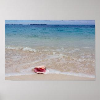 Póster Concha en la playa, Bahamas de la reina