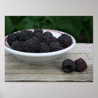 Póster Cuenco de frambuesas negras frescas del jardín