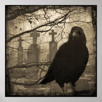 Póster Cuervo viejo