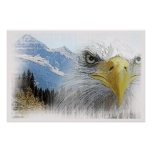 Poster de American Eagle