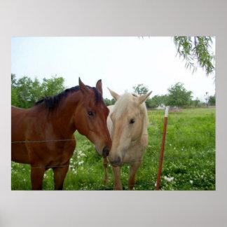 Poster de dos caballos