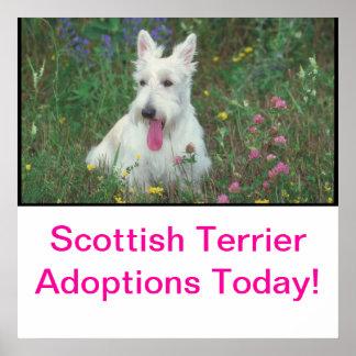 Poster de la adopción de Terrier del escocés Póster