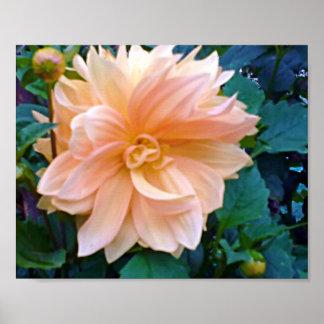 Poster de la flor del crisantemo