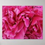 """Poster de la impresión de los """"Peonies rosados"""""""