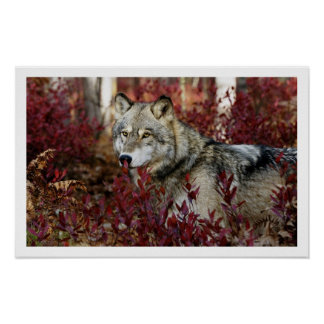 Poster de la impresión del arte del lobo gris