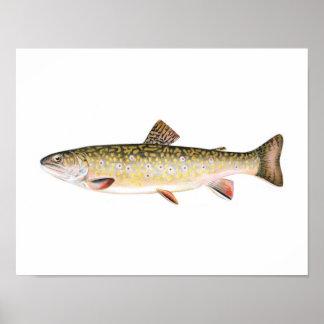 Poster de la pesca - pescado de la hembra de la tr póster