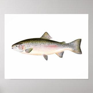Poster de la pesca - pescado de la trucha arco iri póster