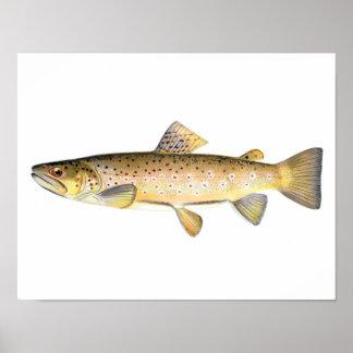 Poster de la pesca - pescado de la trucha de Brown Póster