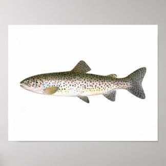 Poster de la pesca - pescado de la trucha de color póster