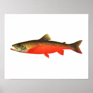 Poster de la pesca - pescado rojo canadiense del v póster