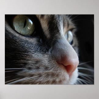 poster de los ojos de gato póster