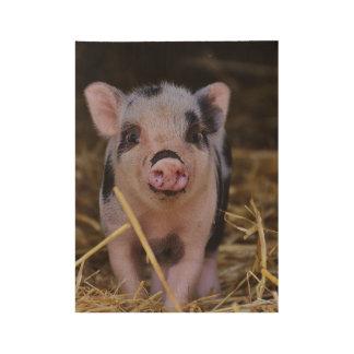 Póster De Madera Cerdo lindo dulce