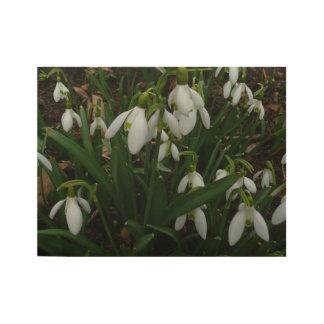 Póster De Madera Flores blancas de la primavera de Snowdrops I