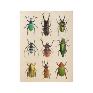 Póster De Madera Insectos hermosos de la manía del escarabajo