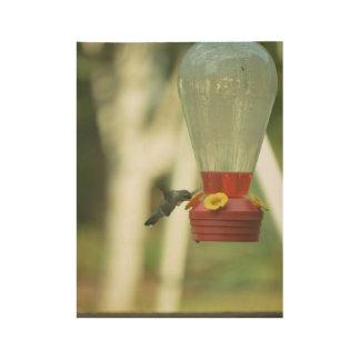 Póster De Madera Pájaro del tarareo