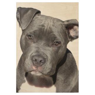 Póster De Madera Pitbull Terrier americano