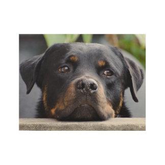 Póster De Madera Rottweiler que mira sobre la cerca