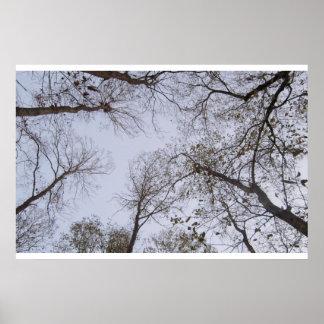 Poster del árbol y del cielo