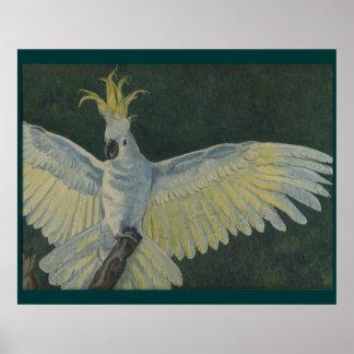 Poster del Cockatoo
