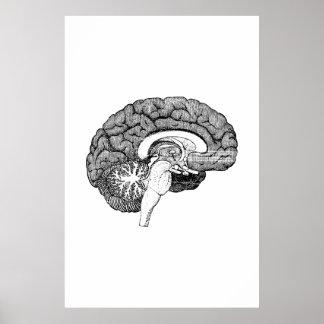 Poster del ejemplo de la anatomía del cerebro póster