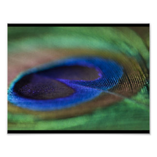 Poster del penacho del pavo real póster