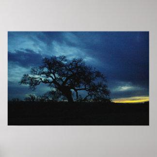 Poster del roble en la puesta del sol póster