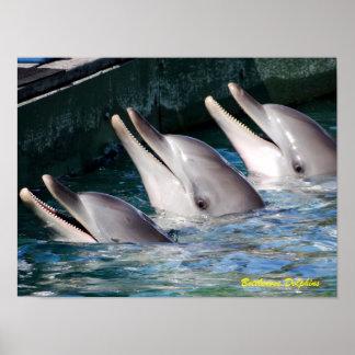 Póster Delfín de Bottlenose