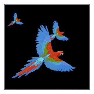 Poster dibujado mano de tres Macaws que vuela Póster