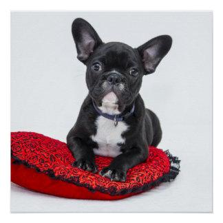 Póster Dogo blanco y negro Terrier en la almohada roja