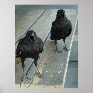 Póster Dos cuervos Cawing en un banco fuera del poster