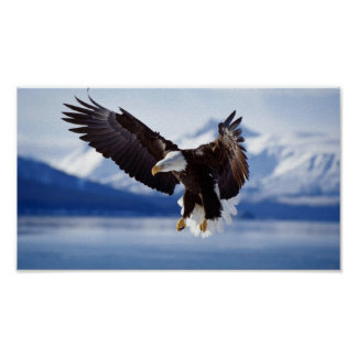 PÓSTER EAGLE CALVO EN ALASKA