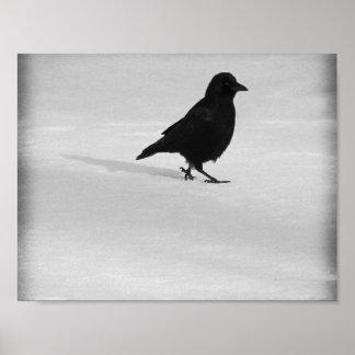 Póster El caminar del cuervo de la nieve