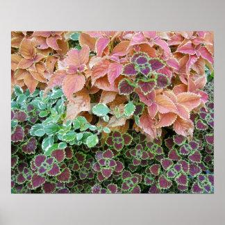 Póster El coleo colorido del arco iris planta la