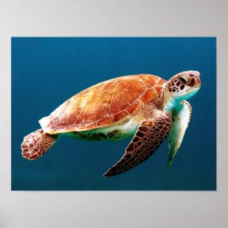 Póster El océano - la tortuga de mar explora las aguas