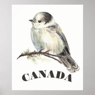 Póster El pájaro nacional Jay gris gris, whisky Jack de
