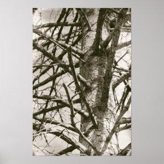 Póster El pino del árbol de la madera ramifica bosque