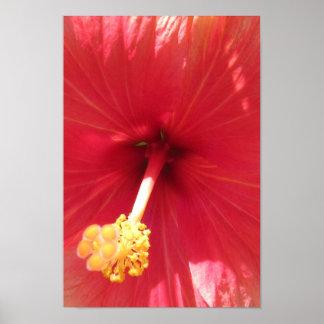 Póster El poster rosado de la flor del hibisco