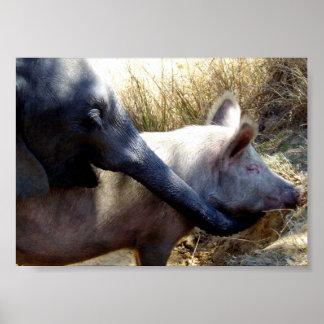 Póster Elefante y cerdo en África