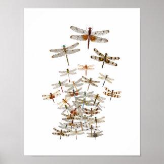 Póster Enjambre grande de libélulas